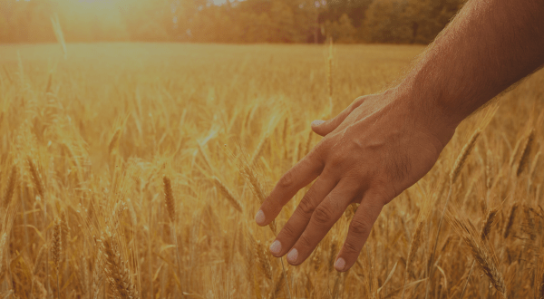 Psalms for gratitude blog banner picture of man's hand in field